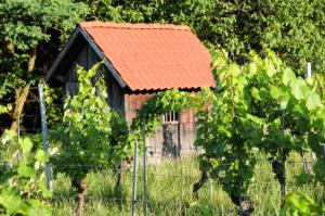 an einem Weinfeld