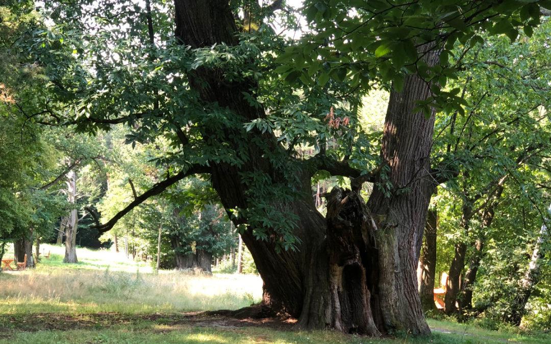 Akut: Waldbrandgefahr – Wie Sie unseren Wald schützen