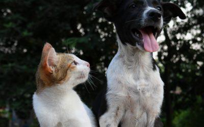 Meldepflichten in der Hunde- und Katzenhaltung